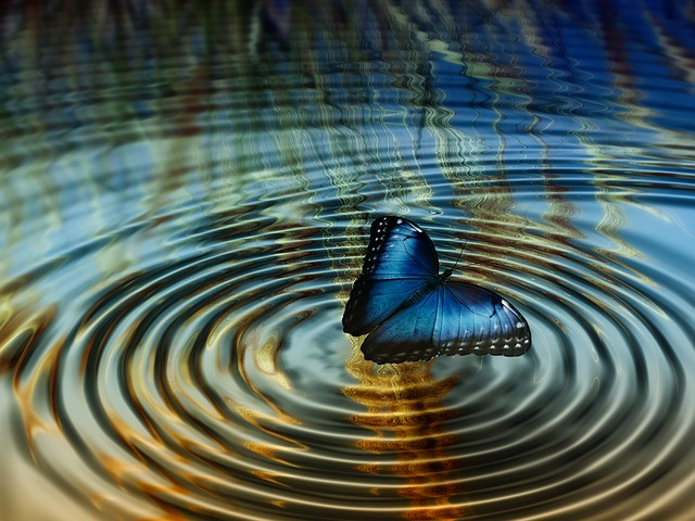 butterfly ripple in water