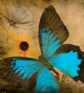 Abstract brown butterfly art