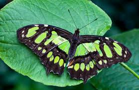 Myths, Symbolism and Meaning of Green Butterflies