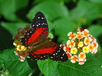 Myths, Symbolism and Meaning of Red Butterflies